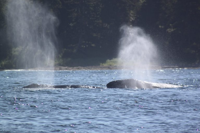 Adventure Tofino Wildlife Tours