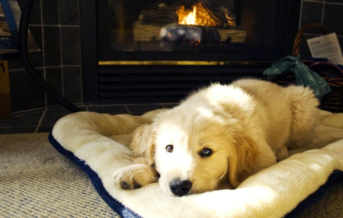 Puppy enjoying his fluffy bed at the Wickaninnish Inn.