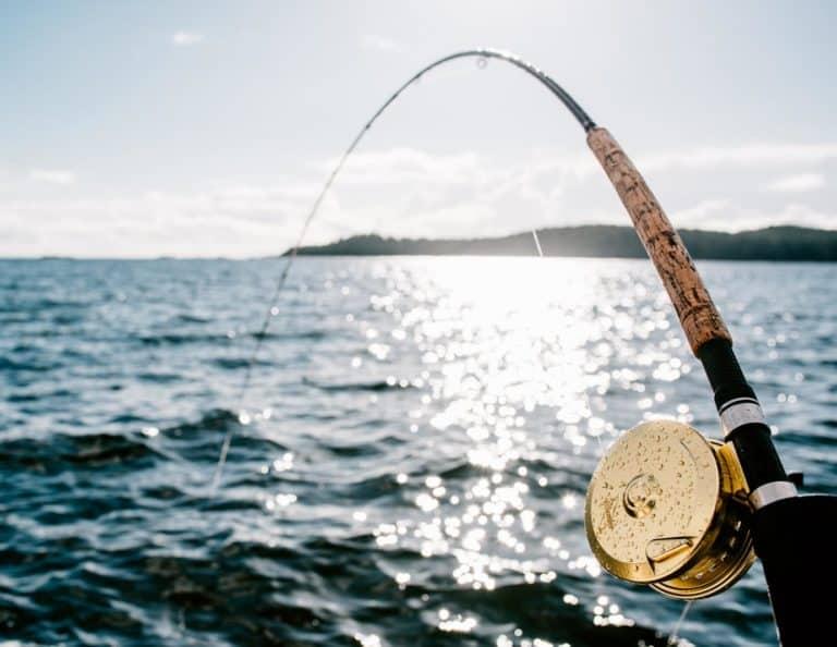 WardoWest Tofino Sportfishing