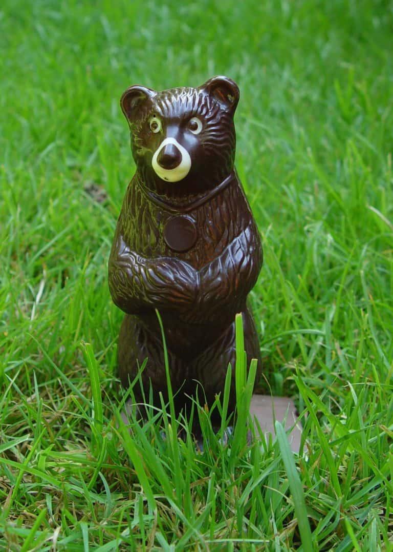 chocolate_tofino_bear