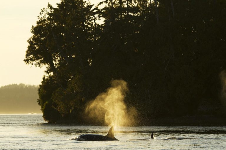 Ocean Outfitters Tofino Adventure Specialists