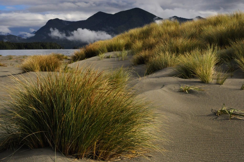 Sand dunes by the sea in Clayoquot Sound