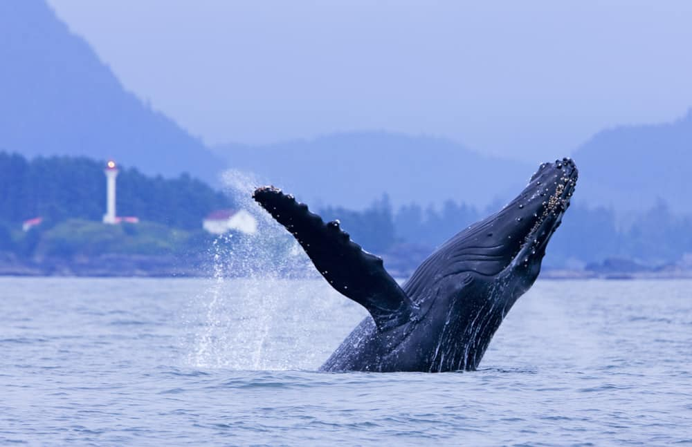 Wildlife viewing + Hot Springs Cove | The Official Tourism Tofino on