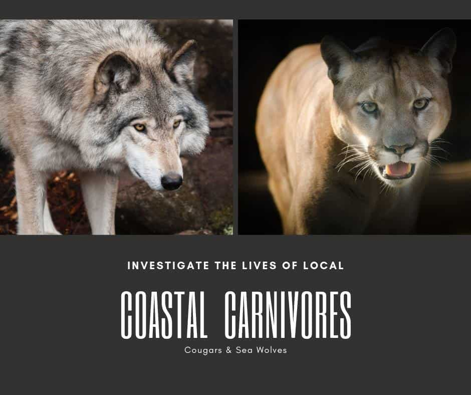 Carnivores of the Coast Wild Pacific Trail Interpretive Walk